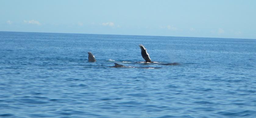 Walvissen 1